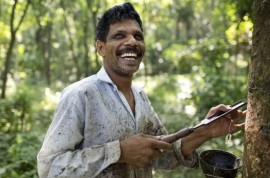 印度或将天然橡胶视为农产品